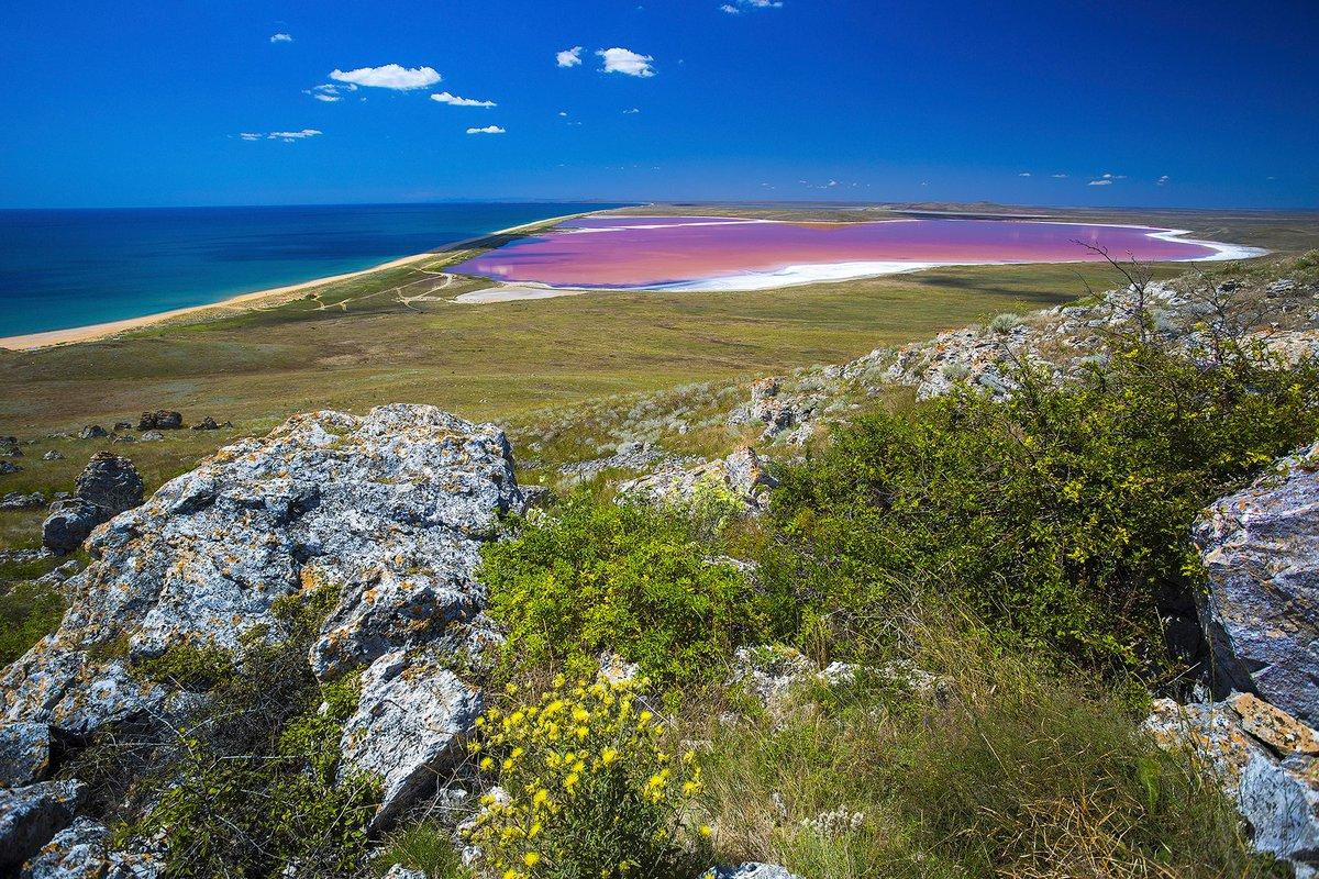 Крым: тюльпаны Кояшского озера